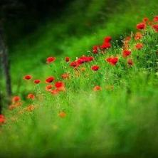 Курсы флористики за рубежом: как и где выучиться на флориста