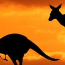 Магистратура в Австралии